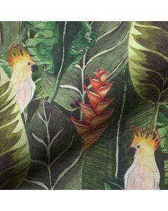 Kaketoe - Rainforest